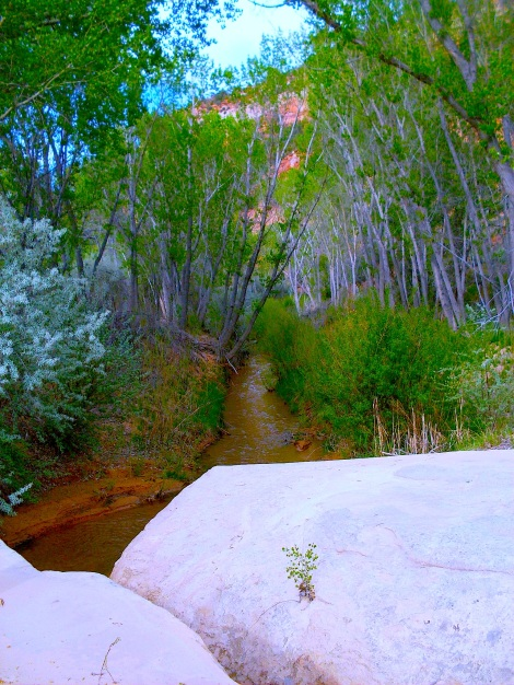 """The beginning of the """"almost slot canyon."""""""