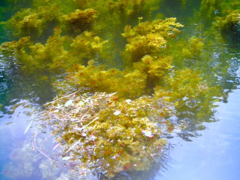 The afternoon light lit up the seaweed.