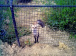 Red Wolf Sanctuary